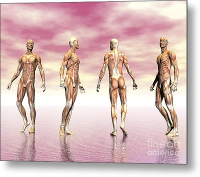 Male Muscular System From Four Points Metal Print by Elena Duvernay