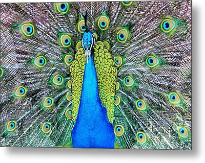 Male Peacock Metal Print