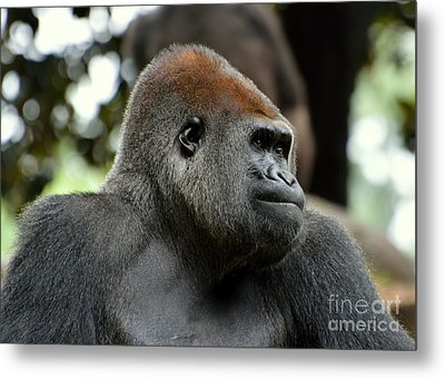 Metal Print featuring the photograph Male Silverback by Lisa L Silva