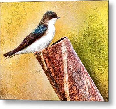 Male Tree Swallow No. 2 Metal Print