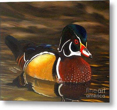 Male Wood Duck Portrait Metal Print by Jane Axman