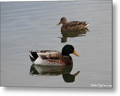 Metal Print featuring the photograph Mallard Ducks Reflecting by Robert Banach