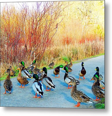 Mallards In The Park Metal Print