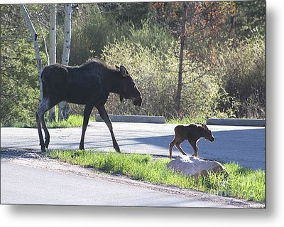 Mama And Baby Moose Metal Print