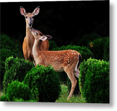 Mama And Her Fawn Metal Print by Angel Cher