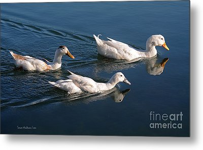 Metal Print featuring the photograph Mama Duck Leads The Way by Susan Wiedmann