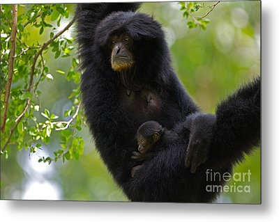 Mamas Hammock Metal Print by Ashley Vincent