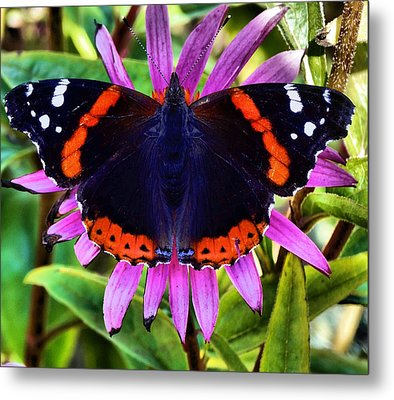 Mammoth Butterfly Metal Print by Dan Sproul