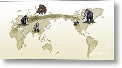 Mammoth Evolutionary Migration Metal Print by Spl