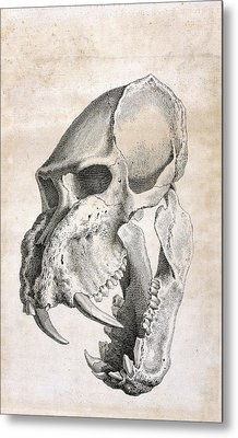 Man-tiger Skull Metal Print