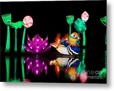 Mandarin Duck Chinese Lantern Metal Print by Tim Gainey