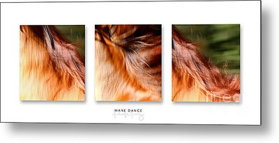 Mane Dance Triptych Metal Print by Michelle Twohig