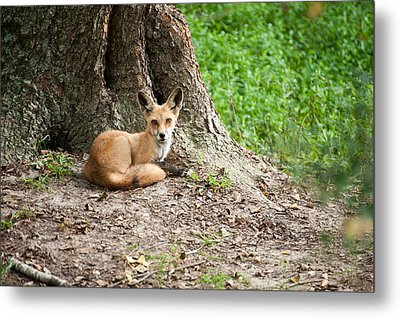 Maned Wolf Metal Print
