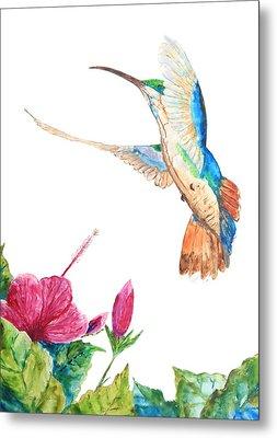 Mango Hummingbird Metal Print by Patricia Beebe
