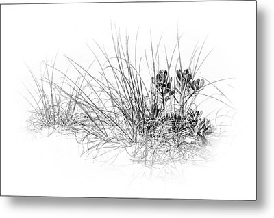 Mangrove And Sea Oats-bw Metal Print by Marvin Spates