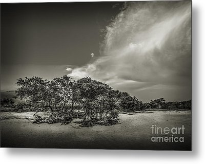 Mangrove At Low Tide Metal Print by Marvin Spates