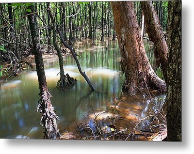 Mangrove Trees Metal Print