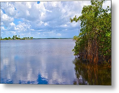 Metal Print featuring the photograph Mangroves In Matlacha Florida by Timothy Lowry