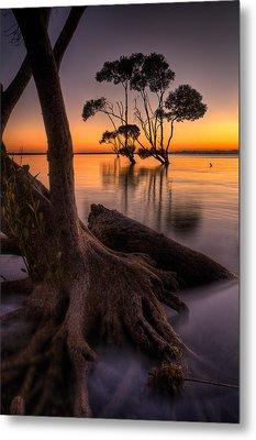 Mangroves Of Beachmere Metal Print by Robert Charity