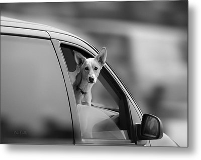 Mans Best Friend Riding Shotgun Metal Print by Bob Orsillo