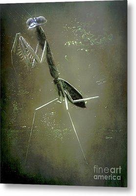 Mantis II Metal Print by Arne Hansen