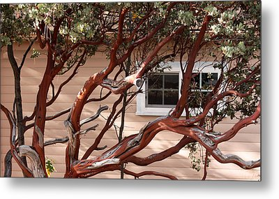 Manzanita Metal Print by Denice Breaux