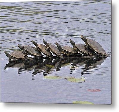 Map Turtles Metal Print by Tony Beck