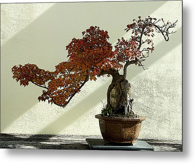 Maple Bonsai Metal Print