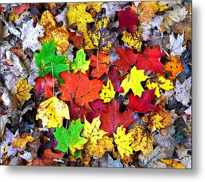 Metal Print featuring the photograph Maple Carpet by Jackie Carpenter