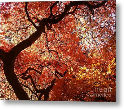 Maple In Fall Metal Print