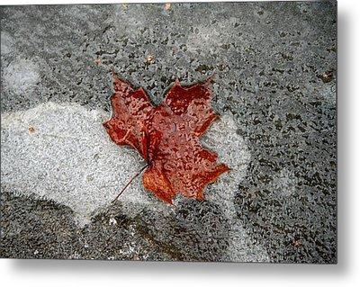 Maple Leaf Under Ice Metal Print by Carolyn Reinhart