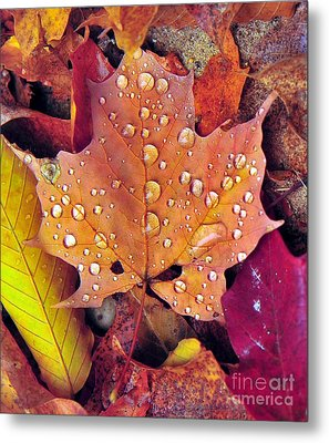Maple Leaf With Raindrops Metal Print by Terri Gostola
