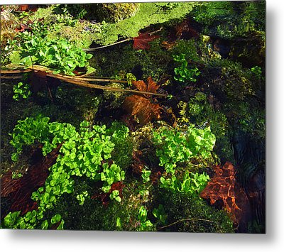 Maple Leaves And Watercress Metal Print by Robin Street-Morris