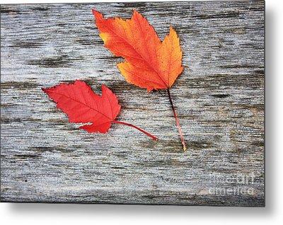 Maple Leaves Metal Print by Gerry Bates