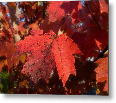Metal Print featuring the photograph Maple Leaves In Autumn Red by MM Anderson