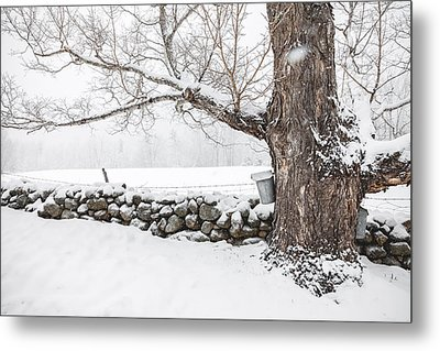 Metal Print featuring the photograph Maple Sugaring by Robert Clifford