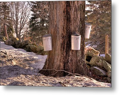 Maple Syrup Buckets Metal Print