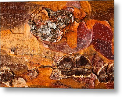 Maple Tree Bark Metal Print