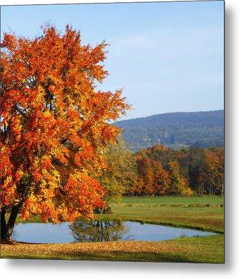 Maple Tree Metal Print by David Simons