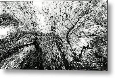 Maple Tree Inkblot Metal Print by CML Brown