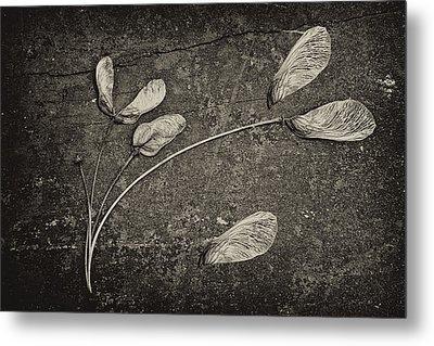 Maple Tree Whirlybirds Metal Print by Tom Mc Nemar