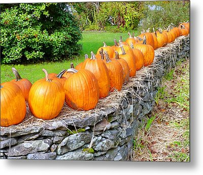 Metal Print featuring the photograph March Of The Pumpkins by Janice Drew