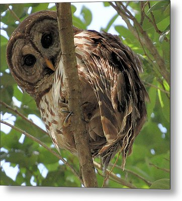 Metal Print featuring the photograph Marcus' Backyard Hooter by AnnaJo Vahle