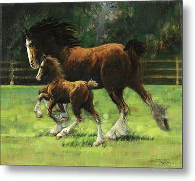 Clydesdale Mare And Colt Metal Print by Don  Langeneckert