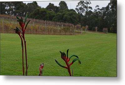 Margaret River Vineyard 1.2 Metal Print