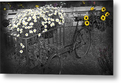 Marguerites And Bicycle Metal Print