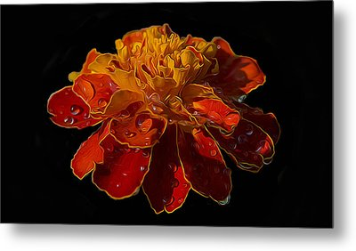Marigold Tagetes Metal Print by Michael Moriarty