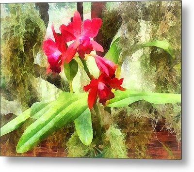 Maroon Cattleya Orchids Metal Print by Susan Savad