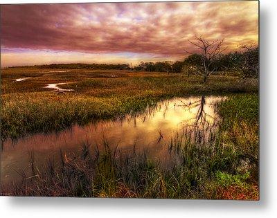 Marsh At Dawn Metal Print by Debra and Dave Vanderlaan