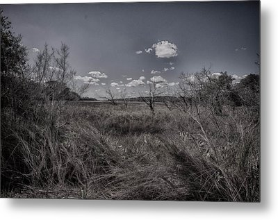 Marsh Metal Print by J Riley Johnson